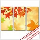 Leinwanddruck - Motive: Herbst Laub - 3 Teiler