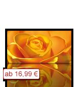 Leinwanddruck Motiv - Gelbe Rose