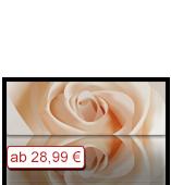 Leinwanddruck Motiv - Pastell Rose