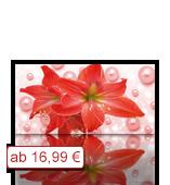 Leinwanddruck Blumen Motiv rote Amarillis Blüte